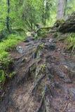 Tronco di albero bagnato e muschio verde in primo piano della foresta Fotografia Stock Libera da Diritti