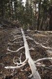 Tronco di albero caduto che si decompone sulla terra Fotografia Stock