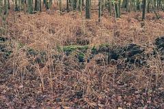 Tronco di albero caduto che si trova fra le felci morte nella foresta di autunno Fotografia Stock Libera da Diritti