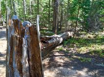 Tronco di albero caduto irrotto due pezzi immagini stock libere da diritti