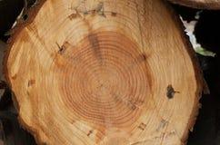 Tronco di albero con gli anelli Fotografia Stock Libera da Diritti