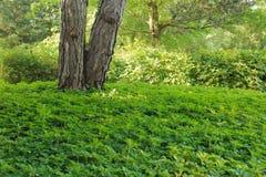 Tronco di albero con la copertura al suolo Fotografia Stock Libera da Diritti