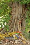 Tronco di albero con le radici e le ghirlande fotografia stock libera da diritti