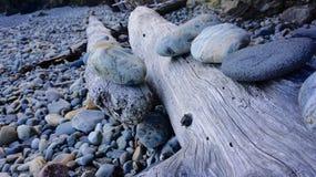 Tronco di albero con le rocce Immagini Stock