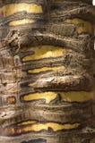Tronco di albero con le toppe Fotografia Stock Libera da Diritti