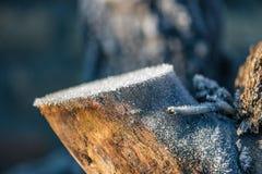 Tronco di albero coperto di cristalli di ghiaccio fotografia stock libera da diritti