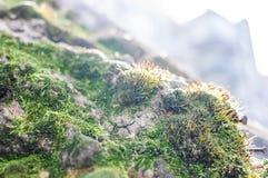 Tronco di albero coperto di Moss Under Bright Daylight fotografia stock