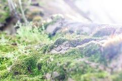 Tronco di albero coperto di Moss Under Bright Daylight fotografia stock libera da diritti