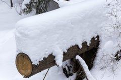 Tronco di albero coperto di neve fresca nell'inverno Immagini Stock Libere da Diritti