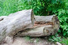 Tronco di albero d'annata che si trova in un parco nazionale fotografia stock