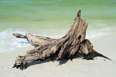 Tronco di albero d'erosione sulla spiaggia Fotografie Stock Libere da Diritti