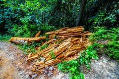 Tronco di albero decomposto nel lago falls vicino alla sommità in Columbia Britannica, Canada di Coquihalla fotografia stock