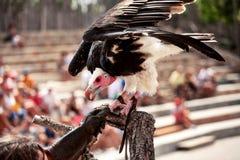 Tronco di albero dell'avvoltoio che aspetta il suo spuntino quotidiano immagine stock