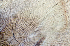 Tronco di albero di legno del taglio di struttura fotografia stock