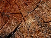 Tronco di albero ed i suoi anelli annuali Immagine Stock