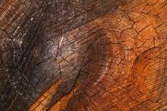 Tronco di albero misero del taglio Immagini Stock Libere da Diritti