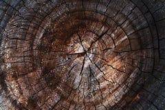 Tronco di albero misero del taglio Fotografie Stock