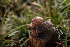 Tronco di albero mistico Fotografia Stock