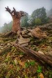 Tronco di albero morto corrugato fotografia stock