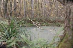 Tronco di albero morto in piccolo stagno con acqua lattea in foresta immagini stock
