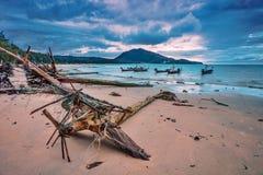 Tronco di albero sulla spiaggia tropicale fotografie stock for Disegni di casa sulla spiaggia tropicale