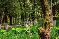 Tronco di albero nel parco Fotografie Stock Libere da Diritti