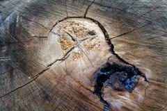 Tronco di albero nella sezione trasversale immagini stock libere da diritti