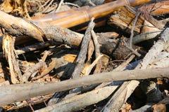 Tronco di albero per fuoco Fotografie Stock Libere da Diritti