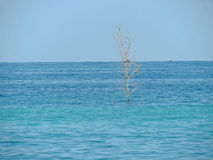 Tronco di albero sfrondato che sta forte su fondale marino Immagine Stock