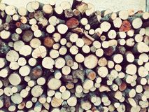 Tronco di albero tutto nel suo posto Fotografie Stock