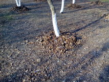Tronco di albero in un letto delle foglie di autunno asciutte Immagine Stock Libera da Diritti