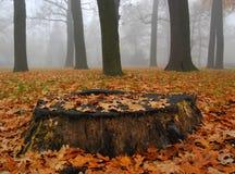 Tronco di autunno in parco nebbioso fotografie stock