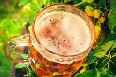 Tronco di legno della birra dorata della pinta Immagine Stock Libera da Diritti