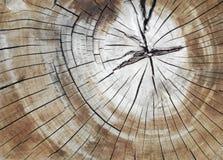 Tronco di pino incrinato nella sezione trasversale Immagini Stock Libere da Diritti
