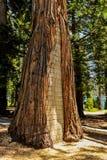Tronco di pino riempito di mattoni immagine stock libera da diritti