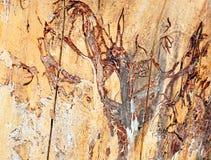 Tronco di un albero senza corteccia di albero immagini stock