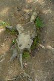 Tronco dopo l'albero tagliato Immagini Stock