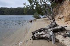 Tronco e árvores na entrada de Mallacoota Foto de Stock Royalty Free
