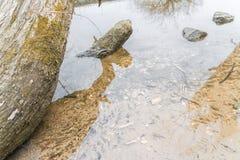 Tronco e pedras de árvore em uma lagoa Fotos de Stock