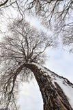 Tronco e ramos de árvore no inverno imagens de stock royalty free