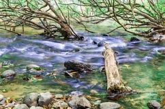 Tronco en The Creek Fotografía de archivo libre de regalías