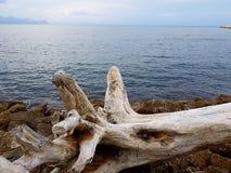 Tronco en la costa Imagen de archivo libre de regalías