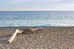 Tronco en la playa Imagen de archivo libre de regalías