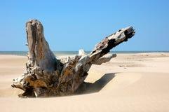 Tronco en la playa Imagenes de archivo