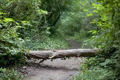Tronco en la trayectoria de bosque Fotos de archivo