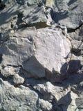 Tronco fosilizado de una planta antigua Imagen de archivo libre de regalías