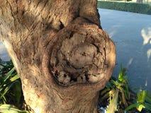 Tronco grande de un árbol Foto de archivo