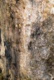 Tronco incrinato di vecchia quercia senza corteccia, albero morto Fotografia Stock Libera da Diritti