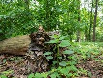 Tronco inoperante na floresta no parque de Tiergarten em Berlim, Alemanha na mola imagens de stock royalty free