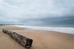 Tronco longo em uma praia africana ocidental, Congo da exposição fotografia de stock